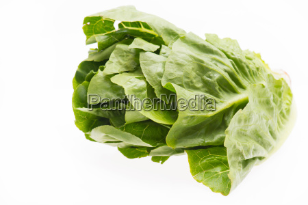 green salad isolated on a white