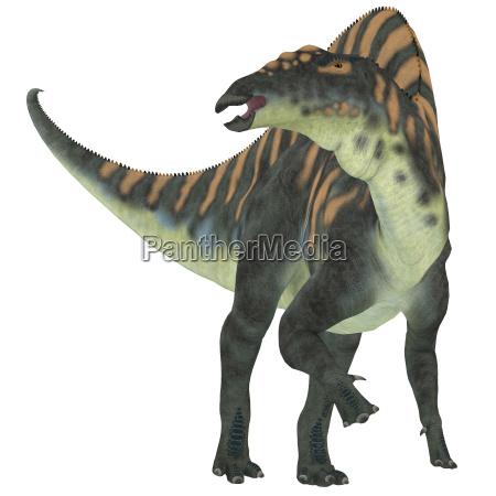 rettile africa lucertola dinosauro erbivoro