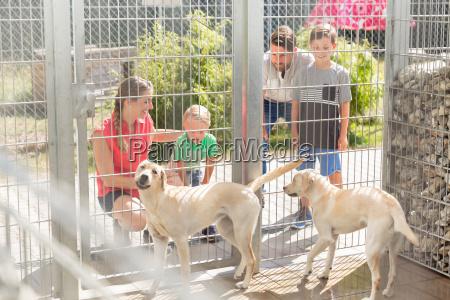 famiglia di conoscere i cani in