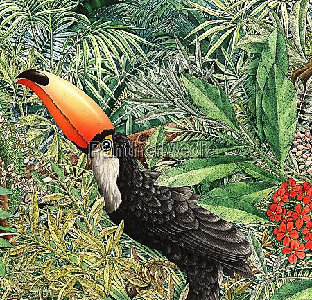 toucan ramphastidae in fogliame lussureggiante