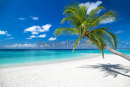 sfondo spiaggia paradiso tropicale