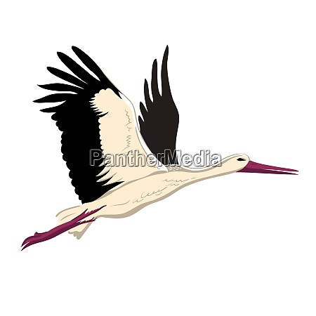white stork flying up wings a