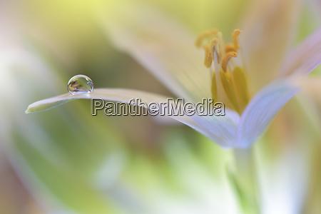 bellissimi fiori riflessi nellacqua concetto artistico