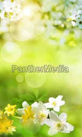 scenario primaverile con fiori smal