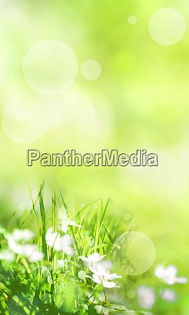paesaggio primaverile astratto verde