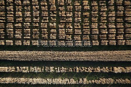 aerial view agricultural trial fields hohenheim