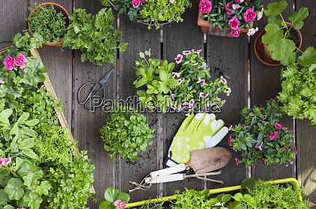 piantare erbe e fiori per lagricoltura