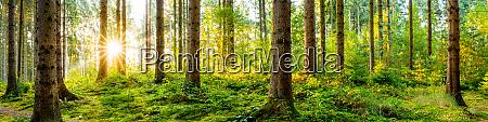bella foresta con sole splendente tra