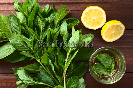 fresh mint and mint tea