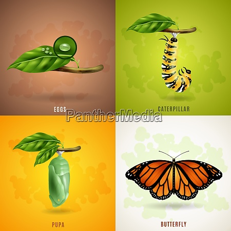 butterfly 2x2 realistic design concept set
