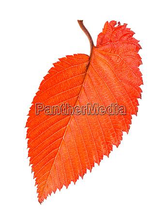 orange and red fallen leaf of