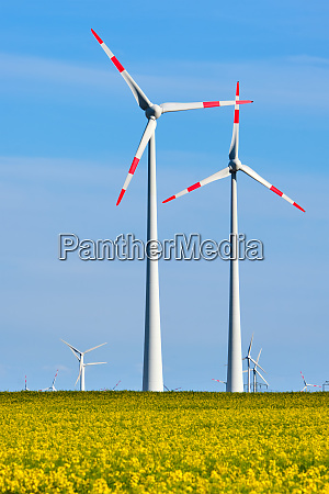 wind turbines in a thriving rapeseed