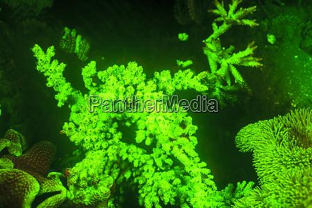 vita marina sottomarina vicino allaeroporto e