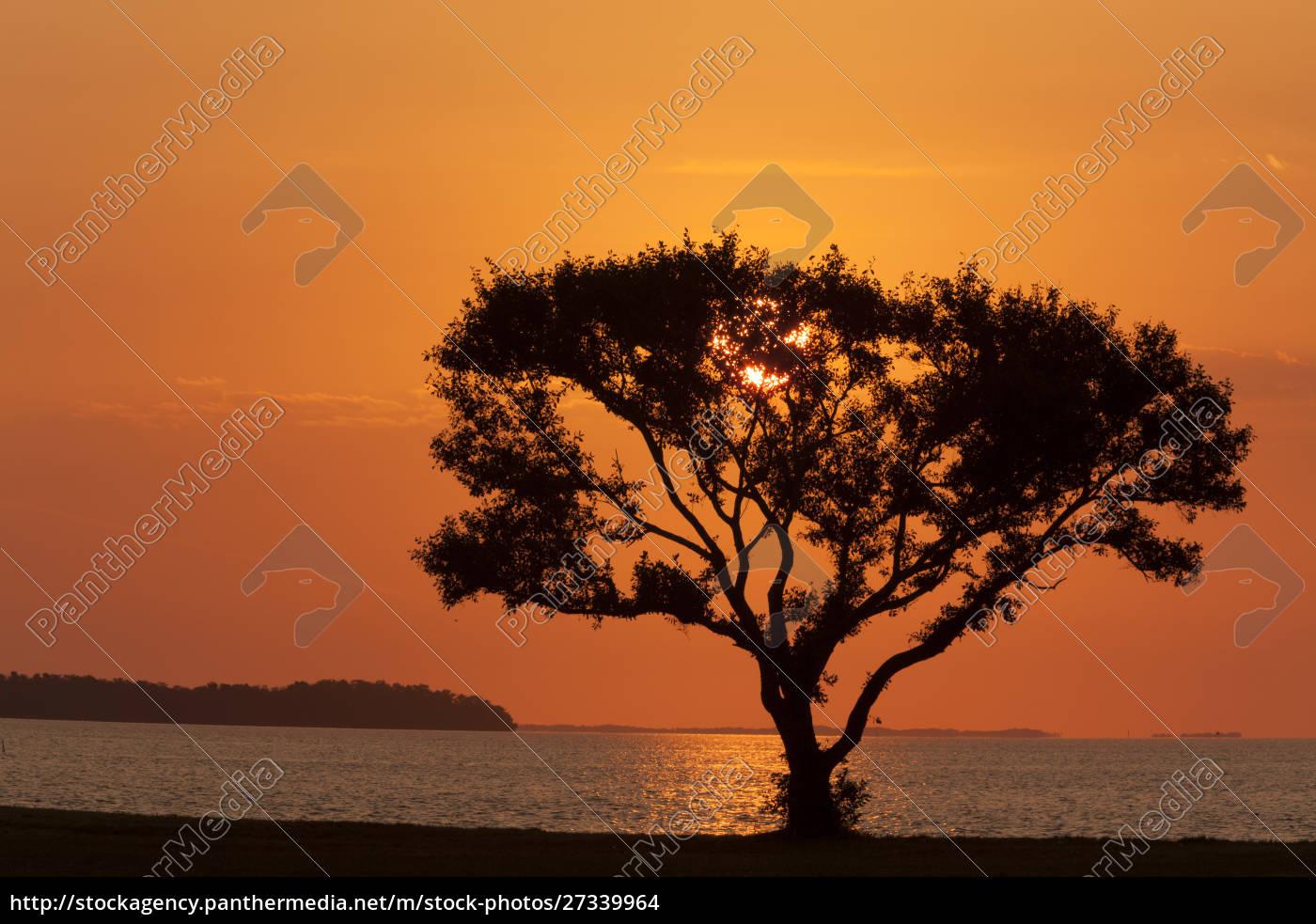 stati, uniti, florida, parco, nazionale, delle, everglades, campo, flamingo. - 27339964