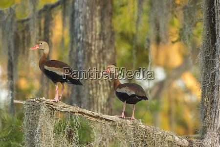 usa louisiana atchafalaya national wildlife refuge
