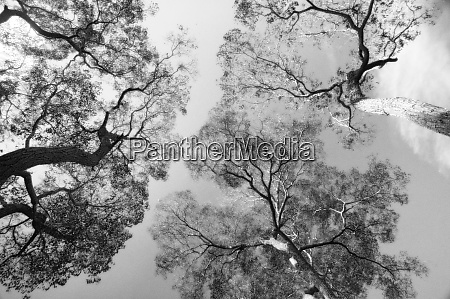 black and white trees looking to
