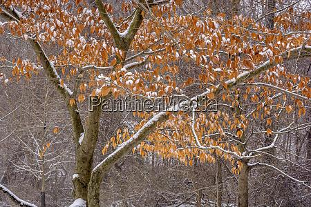 stati uniti pennsylvania filadelfia neve sugli