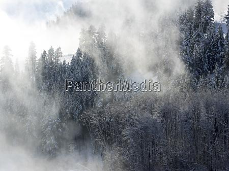 alberi nella nebbia con la luce