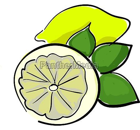 a lemon vector or color illustration