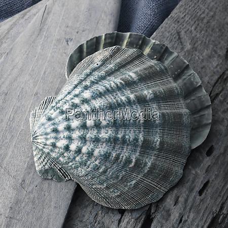 natutical, shell, natura, morta. - 27888312