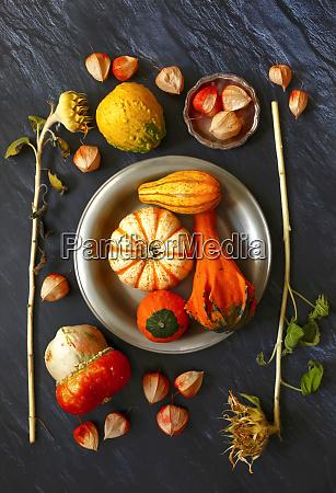 natura, morta, con, zucche, ornamentali - 28049171
