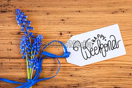 fiore di giacinto blu etichetta calligrafia