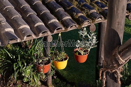 vasi di fiori e piante su