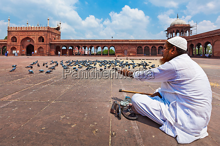 uomo musulmano che nutre i piccioni