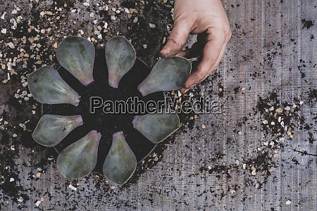 persona che posiziona le foglie di