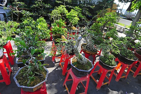 la, cultura, bonsai, in, vietnam - 28846626