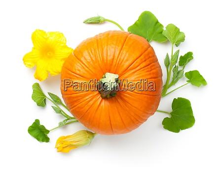 verdure di zucca con fiore giallo