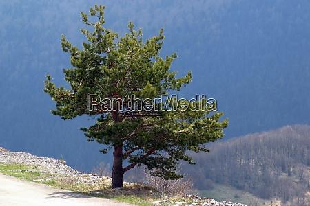 un albero autonomo