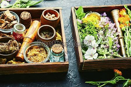 medicinali freschi erbe curative medicina alternativa