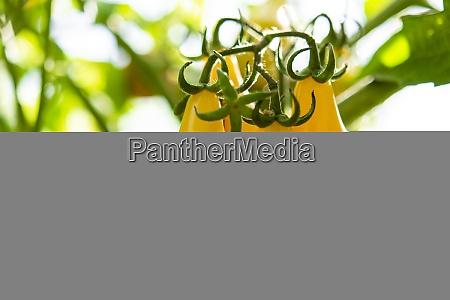 ID immagine 29093417