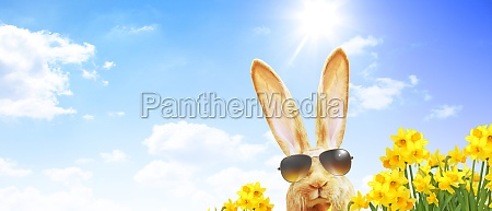 funny, easter, bunny., happy, easter, holiday - 29682085