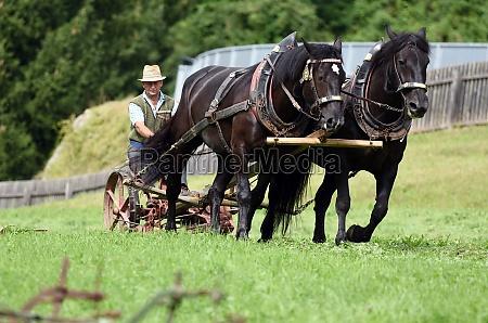 ein pferdegespann mit einem historischen pflug