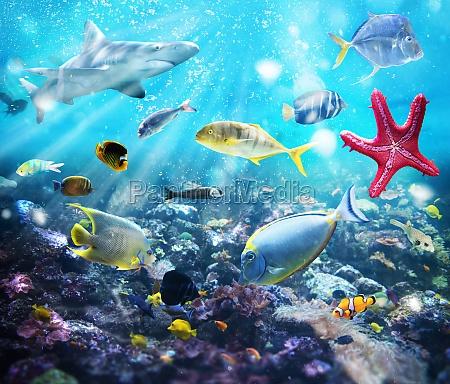 vita, marina - 29839195