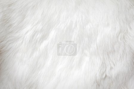ID immagine B28380699