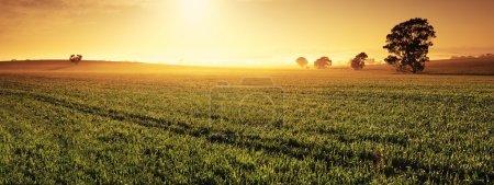 Immagine, sfondo, Cielo., oro, Viaggio, erba - B18865199
