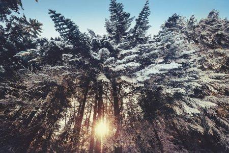 colore bianco blu sfondo cielo bella