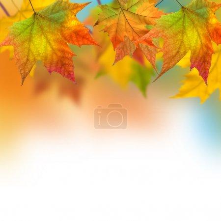 ID immagine B11016324