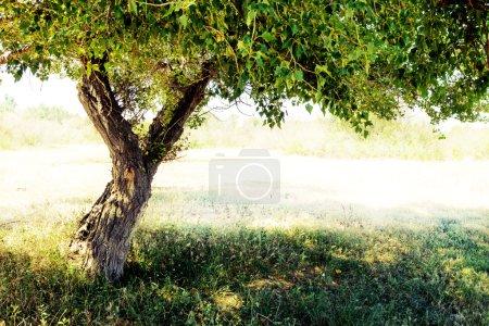 ID immagine B98361680
